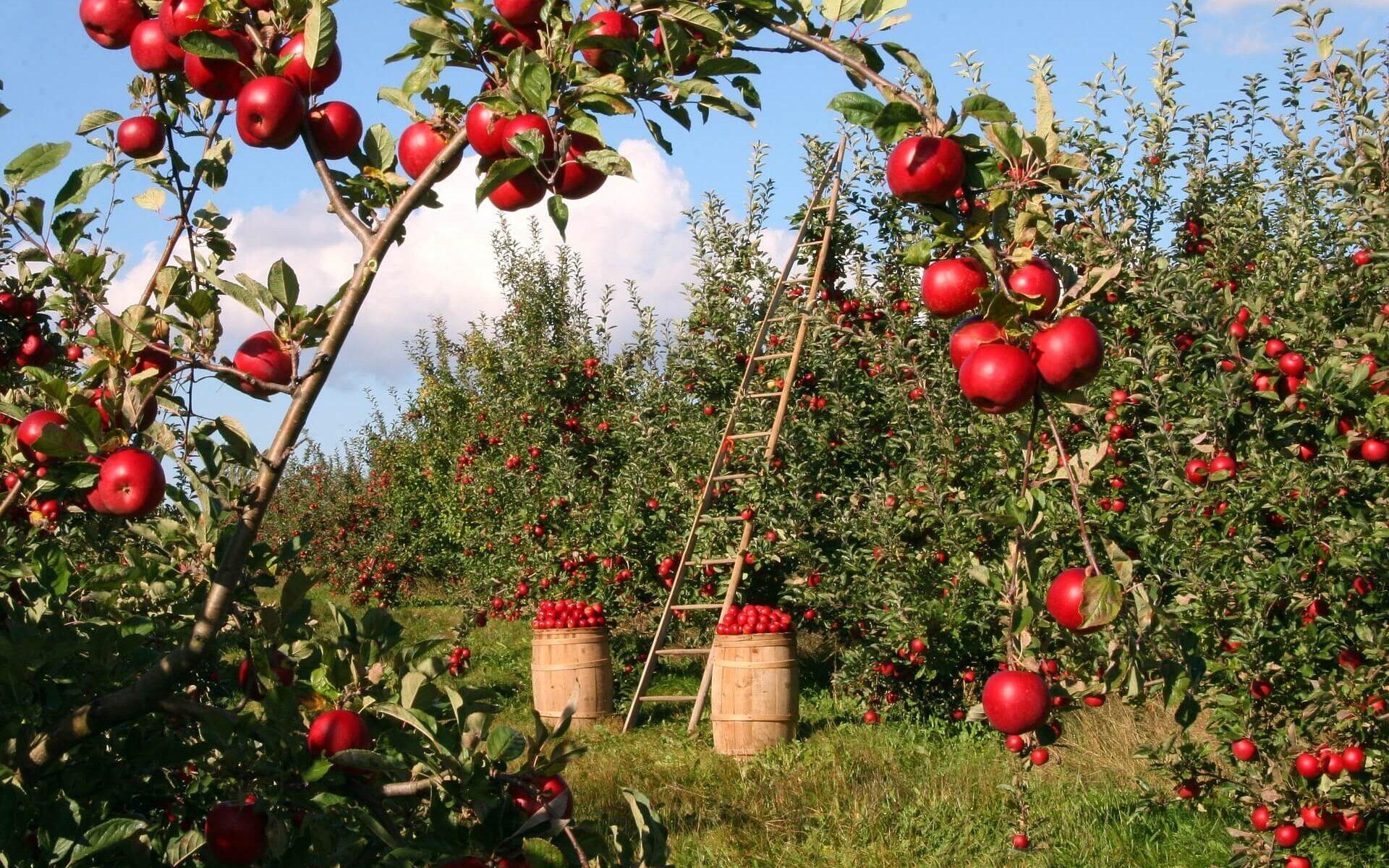 Блог о сельском хозяйстве