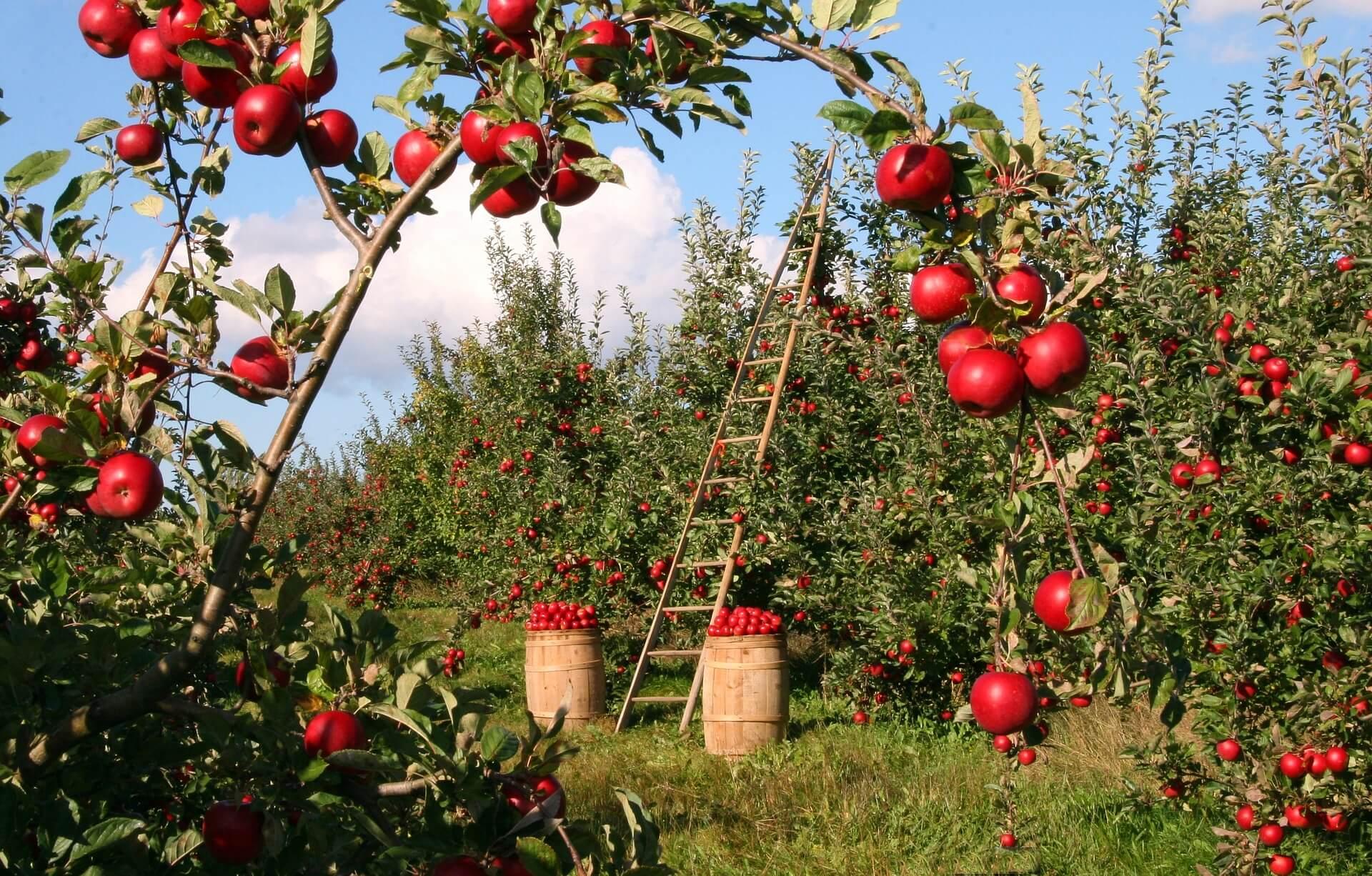 Блог про сільське господарство